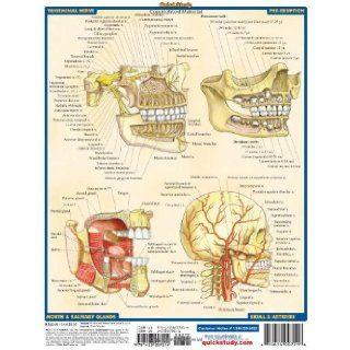 Dental Anatomy (Quickstudy Academic) Inc. BarCharts 9781572228108 Books