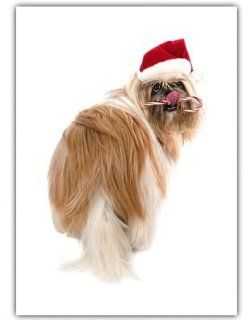 Shih Tzu Dog Christmas Greeting Cards 10 Pack Holiday : Pet Care Products : Pet Supplies