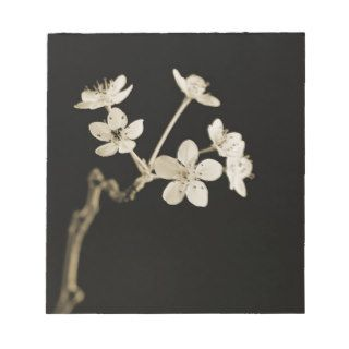 <Twig of Tiny Blossoms Hawthorn Tree> by Tom Notepads