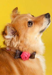 Rose Bud dy Dog Collar  Mod Retro Vintage Pet Accessories