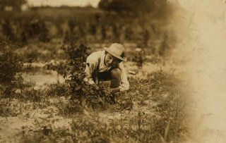 1909 child labor photo Farrand Packing Co. A young berry picker on Curran's f a9