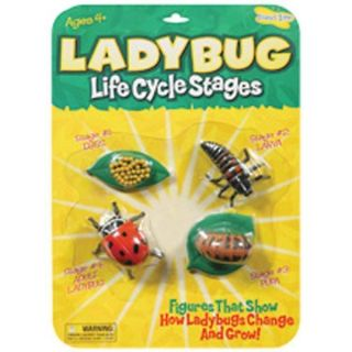 Ladybug Life Cycle Stages   13618926 Big