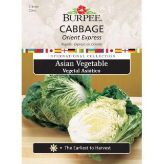 Burpee Asian Cabbage Orient Express Seed 69628